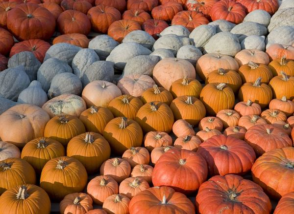 Pumpkins And Squash Recipes