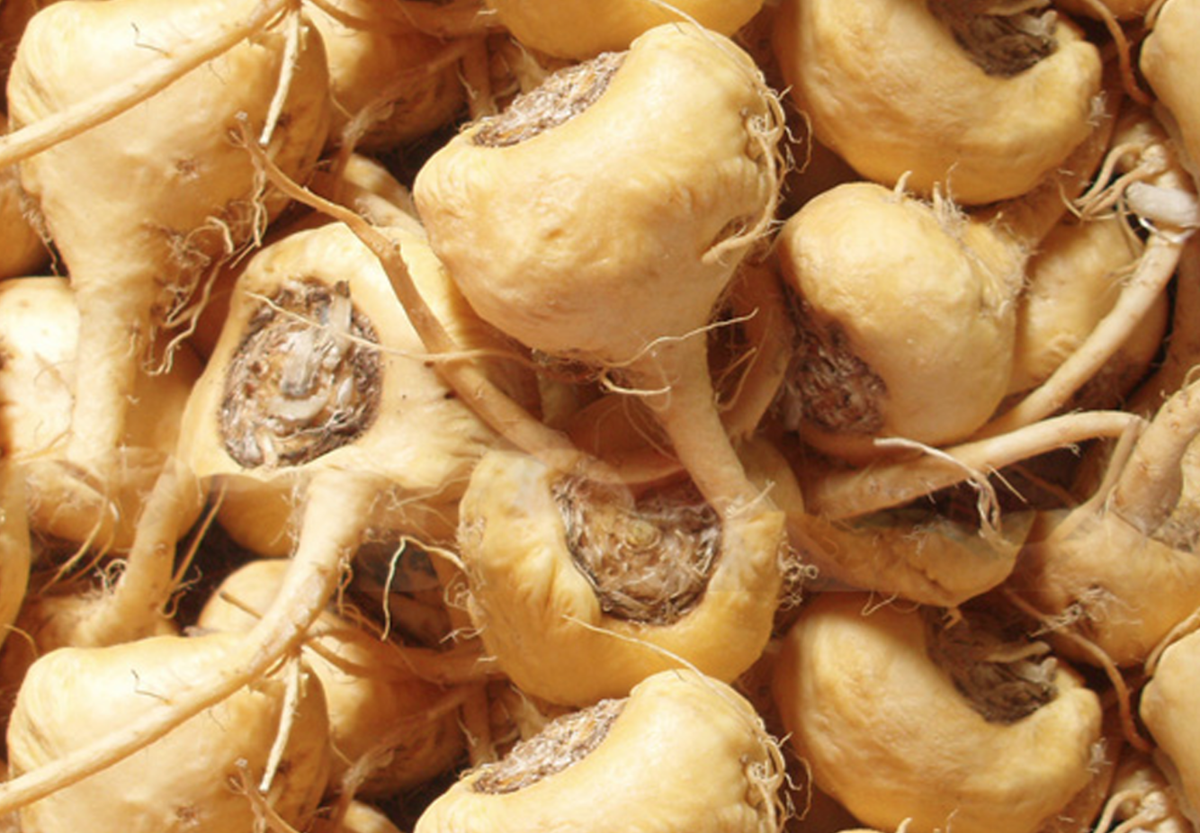 The Amazing Health Benefits of the Maca Root